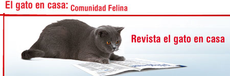 revista_gato_en_casa